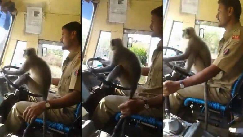Viral Video:... अन जेव्हा बसच्या स्टिअरिंगवर वानर बसतं !