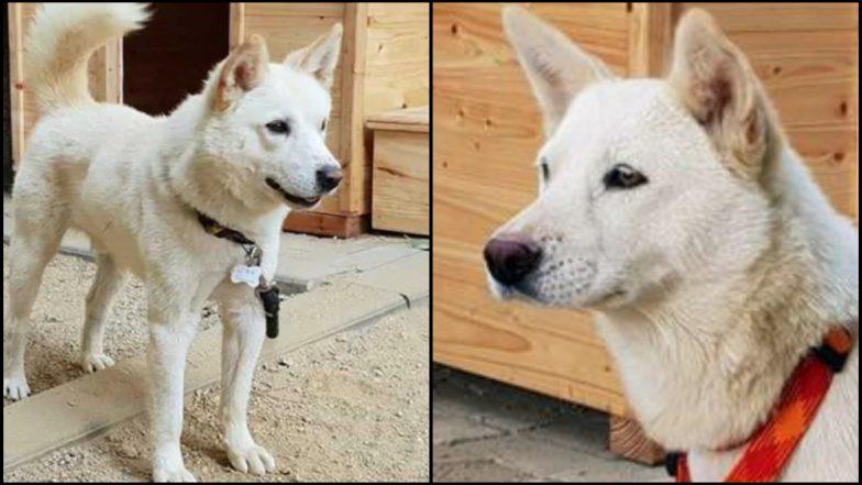 दक्षिण कोरियाच्या राष्ट्रपतींना कुत्रे भेट; किम जोंगनी शब्द केला पूर्ण