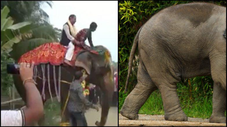 व्हिडिओ: भाजप नेते बिनविरोध जिंकले पण, हत्तीवरुन पडले;  विधानसभा उपाध्यक्षपदी झाली होती निवड
