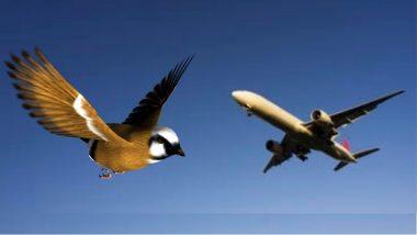 पक्षाच्या धडकेमुळे विमानाला हेलकावे; प्रसंगावधानामुळे टळली दुर्घटना