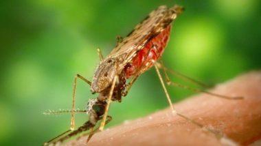 डेंग्यू बाधित व्यक्तीशी शरीर संबंध ठेवल्यास होऊ शकते लागण? जाणून घ्या सविस्तर