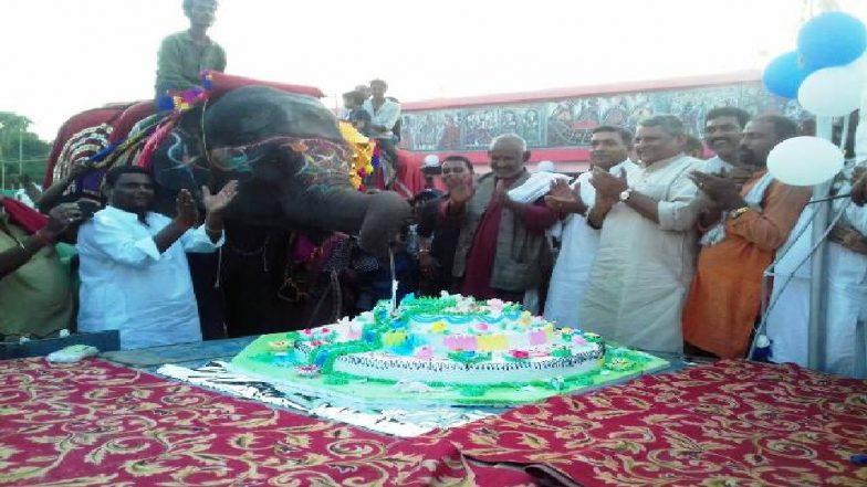हत्तीच्या पिल्लूने वाढदिवसाच्या दिवशी कापला 50 किलोग्रॅमचा केक