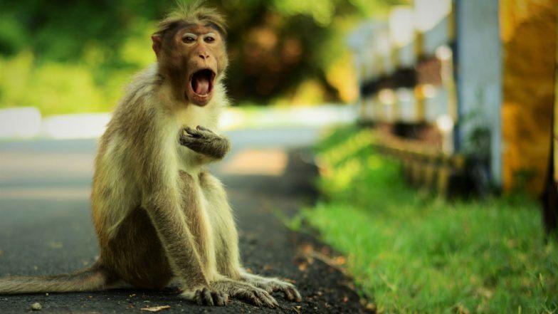 माकडांवर गुन्हा दाखल करा, मृत वृद्धाच्या घरातल्यांची मागणी