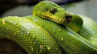 सापांचे विष तस्करी करणारी टोळी गजाआड