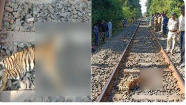 चंद्रपूरात ट्रेनच्या धडकेत वाघीणीच्या दोन बछड्यांनी गमावला जीव