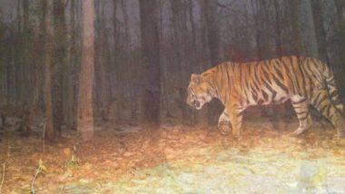 'अवनी' नंतर चंद्रपूरमध्ये वाघाची दहशत, शेतकरी मजूर महिलेचा मृत्यू