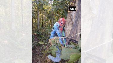 Naxals यांनी हल्ला करण्यासाठी लढवली नवी शक्कल, उभे केले खोटे पुतळे