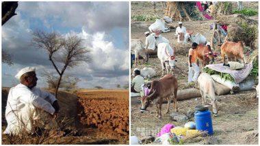 दुष्काळ: राज्य सरकार सरसकट चारा छावण्या उभारणार नाही, शेतकऱ्यांच्या बँक खात्यावर पैसे जमा करु : महादेव जानकर