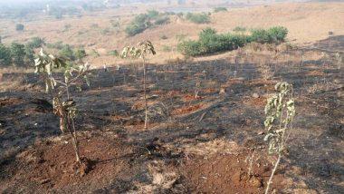 मांगरुळ येथील झाडे जाळल्याने वनाधिकाऱ्यांवर शिवसेना संतप्त, अंगावर फेकली राख