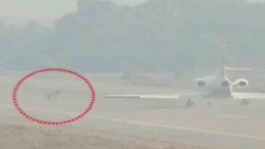 Video- उद्धव ठाकरे अयोध्या दौरा: विमान उड्डाणावेळी फैजाबाद विमानतळावर नीलगाय; थोडक्यात बचावले ठाकरे कुटुंबीय