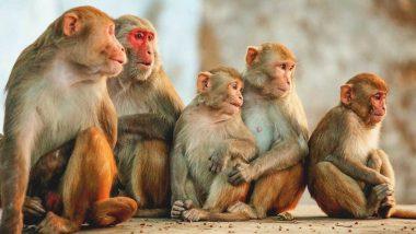 अमरावती: वाई परिसरात आठ दिवसात 16 माकडांचा पाण्याअभावी मृत्यू