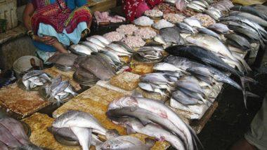 पालघर मध्ये 1.33 कोटीचे 157 घोळ मासे विकून मच्छिमार रातोरात झाला मालामाल