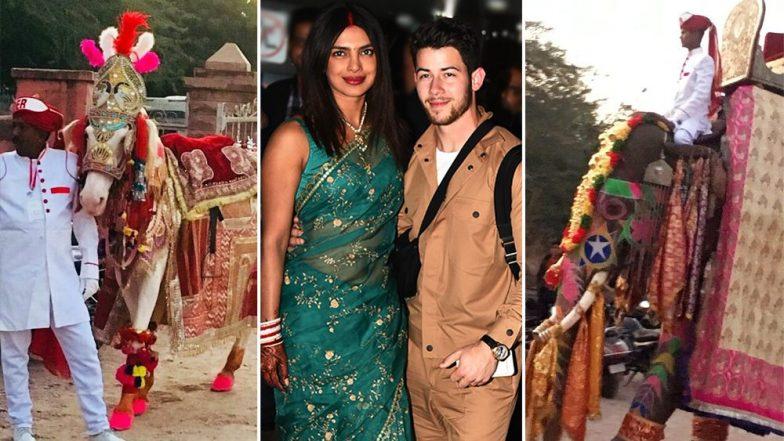 Priyanka Nick Wedding: PETA ने लावले प्रियांका निकवर लग्नामध्ये प्राण्यांचा गैरवापर केल्याचा आरोप, का ते वाचा