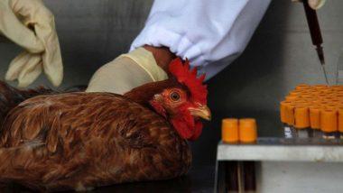 सावधान! Bird Flu परसतोय, 'ही' आहेत लक्षणे आणि कारणे