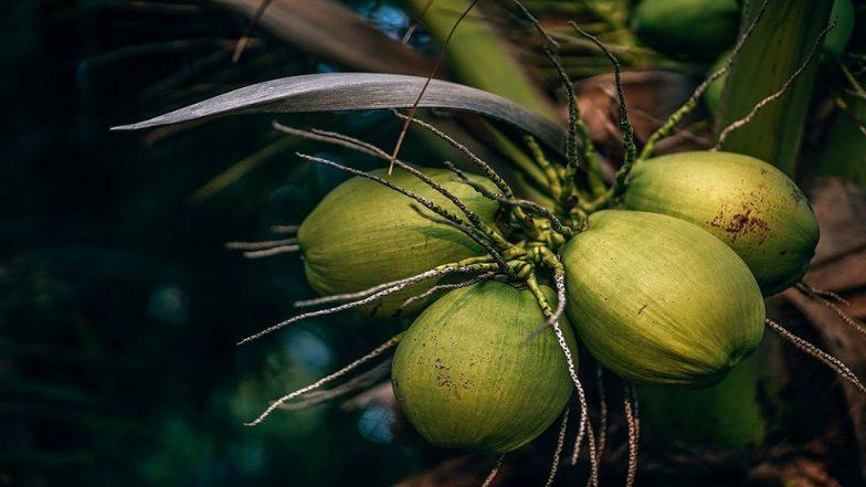 Coconut Water Benefits : नारळपाणी पिण्याचे हे आश्चर्यकारक फायदे तुम्हास माहित आहेत ?
