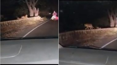 viral Video :  औरंगाबादच्या खुलताबाद घाटात जेव्हा गाडी समोर बिबट्या आला