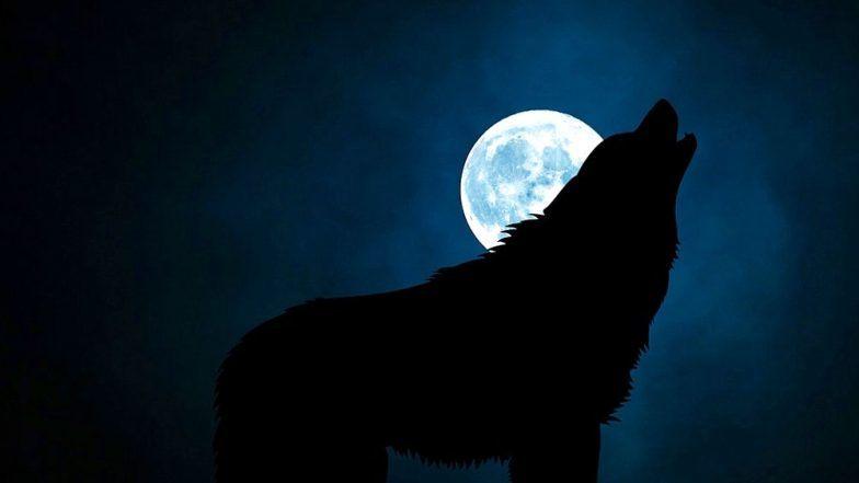 Super Blood Wolf Moon 2019: भारतामध्ये आज चंद्र ग्रहण दिसणार नाही पण सुपरमून कसा, कधी आणि कुठे पहाल?