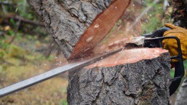 मुंबई-पुणे द्रुतगती मार्गावरील 5500 झाडांवर फिरणार कुऱ्हाड; प्रवासाचा वेळ कमी करण्यासाठी राज्य रस्ते मंडळाचा निर्णय