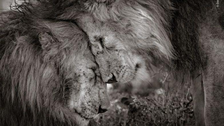 डेव्हिड लॉएड या छायाचित्रकाराने पटकावला 'Wildlife Photographer Of The Year' चा किताब