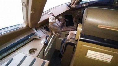 मुंबई विमानतळ: जेट एअरवेजच्या Boeing 777 विमानाच्या कॉकपीटमध्ये घुबड सापडले (Photos)
