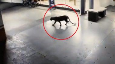 Leopard spotted in Thane: ठाण्यातील सत्कार हॉटेलच्या बेसमेंटमध्ये सापडला बिबट्या; जेरबंद करण्यात यश (Video)
