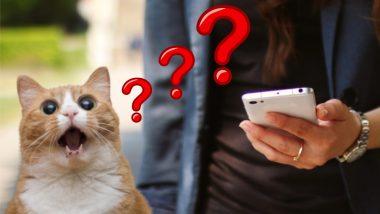 इतक्या स्वस्त दरात Mobile Data Pack जगात कुठेच नाही; जाणून घ्या ठिकाण, जिथे तुम्ही थांबला आहात!
