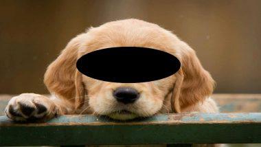 कुत्र्याच्या पिल्लावर बलात्कार; CCTV फुटेज मिळूनही पोलिसांची साक्षीदार महिलेकडे घटनेबाबत सविस्तर माहितीची मागणी
