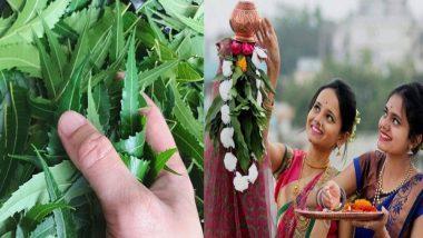Gudi Padwa 2019: गुढीपाडव्याला 'कडूलिंब' खाण्याचे महत्त्व काय?