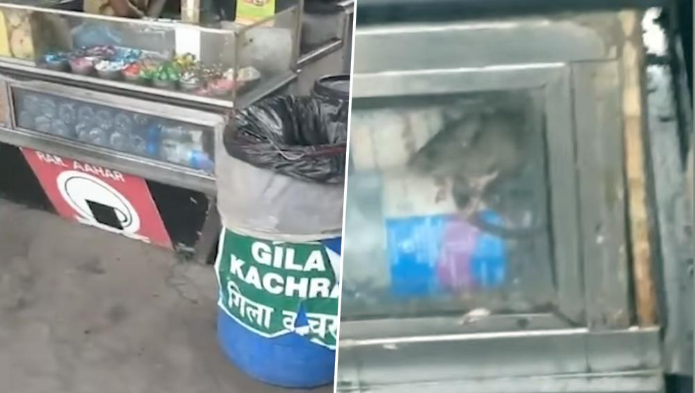 वांद्रे येथे रेल्वे फलाटावरील अन्नपदार्थात उंदिर, दुकान चालकाला 10 हजार रुपये दंड (Watch Video)