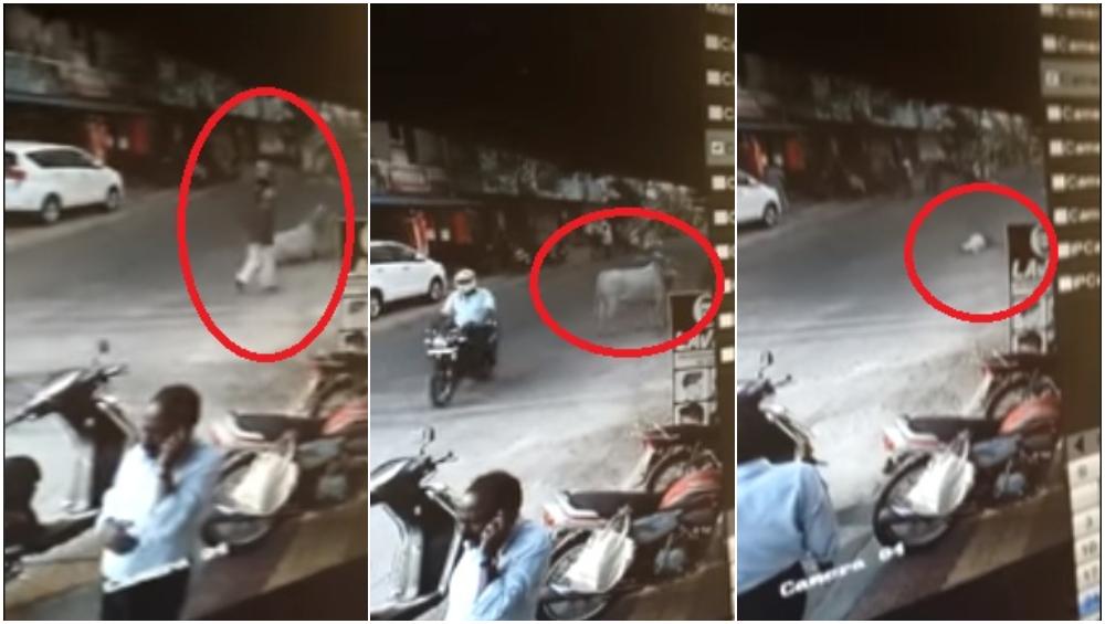CCTV Footage Video: मोकाट वळूच्या धडकेत 79 वृद्ध जागीच ठार, पिंपरी चिंचवड येथील घटना