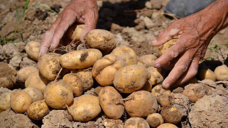 गुजरात मध्ये चार शेतकऱ्यांवर दीड कोटींचं संकट, Pepsico ने केला अवैध लागवडीचा आरोप