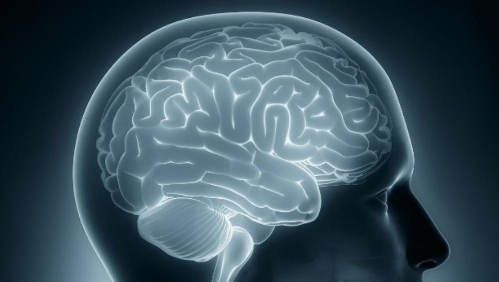 भारतीयांचे मेंदू पाश्चिमात्य लोकांहून आकाराने लहान; IIT हैद्राबाद संस्थेचा दावा