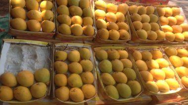 आंबा खरेदी करताय? फसवणूक टाळण्यासाठी, असा ओळखा कोकणी हापूस