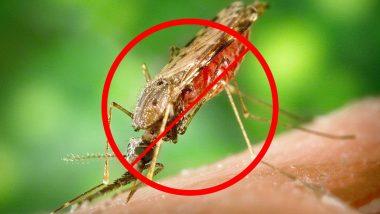 World Malaria Day 2019: मलेरिया रोगाची लक्षणे, उपाय आणि सुरक्षितता