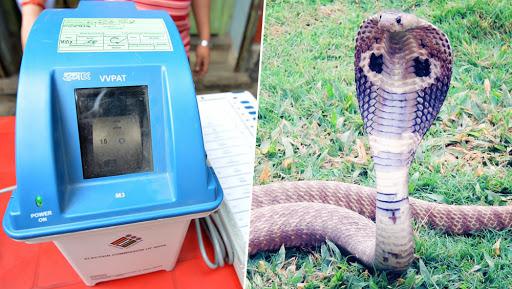 VVPAT मशीनमधून निघाला भलादांडगा साप, मतदान ठप्प; केरळ राज्यातील Kannur मतदारसंघातील घटना
