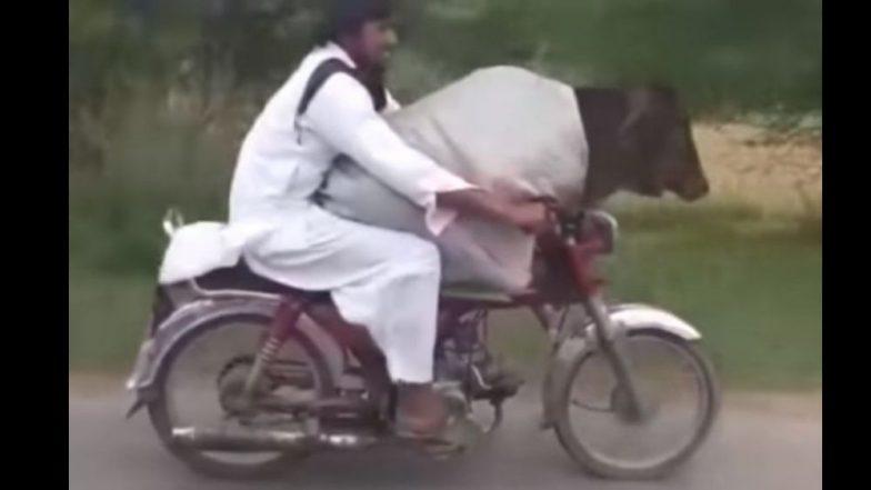 पाकिस्तानमध्ये असाही जुगाड: चक्क गायीला बाईकवर पुढे बसवून केला प्रवास; पहा व्हिडिओ