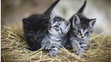 मुंबईत 30 वर्षीय तरुणाने मस्करीच्या नादात मांजरींच्या पिल्लांना जीवंत जाळले