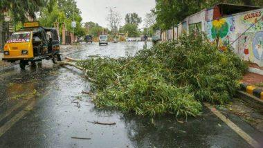 आता झाड पडून मृत्यू झाल्यास 1 लाख, तर जखमी झाल्यास 50 हजार नुकसानभरपाई; महानगरपालिकेचा नवा नियम