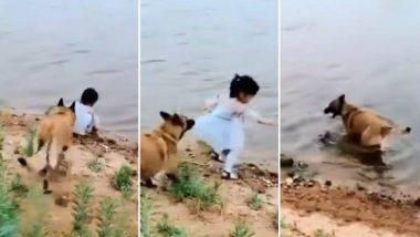 लहान मुलीला वाचवण्यासाठी कुत्र्याची धडपड; पहा व्हिडिओ