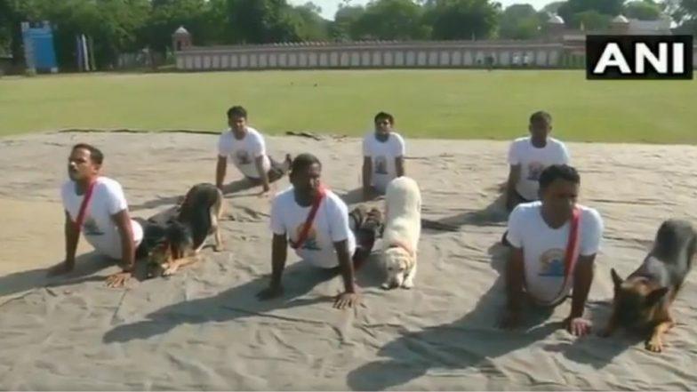 International Yoga Day 2019: जम्मू मध्ये BSF च्या श्वानपथकातील कुत्र्यांनी चक्क प्रशिक्षकांकडून घेतले योगसाधनेचे धडे; पहा त्यांचा Super Cute Video