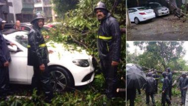 ठाणे: रहेजा गार्डन परिसरात पार्क केलेल्या गाड्यांवर झाड कोसळलं, वाहनांचं नुकसान