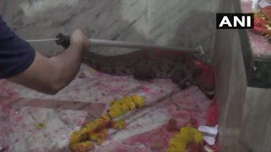 गुजरात: मंदिरात शिरलेल्या मगरीची भाविकांकडून पूजा, वनाधिकाऱ्यांनी केली सुटका