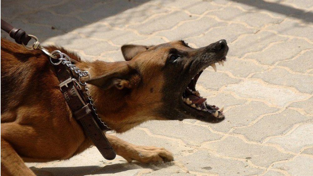 पंजाब: क्लासवरुन घरी येणाऱ्या मुलावर कुत्र्याचा हल्ला, व्हिडिओ व्हायरल