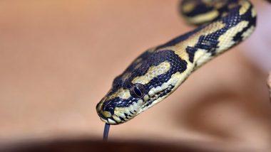 मुंबई: सर्पदंश झाल्यावर चावलेल्या सापासोबत मायलेकी रुग्णालयात, डॉक्टरही आश्चर्यचकीत; सोनेरी चाळ येथील घटना