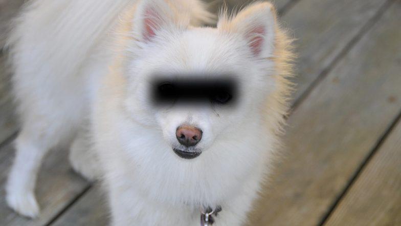 Pomeranian कुत्रीवर सामूहिक बलात्कार, तीन पुरुषांना अटक; Female Dog च्या अंगावर जखमा, प्रकृती गंभीर