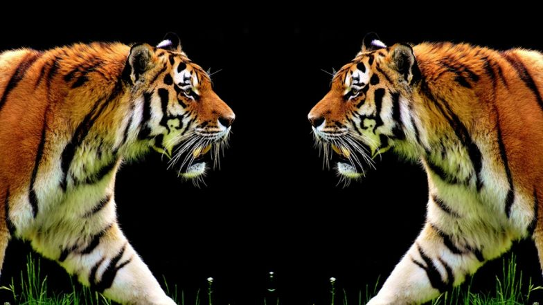 quality design f3003 0954d International Tiger Day 2019: का साजरा करतात ...