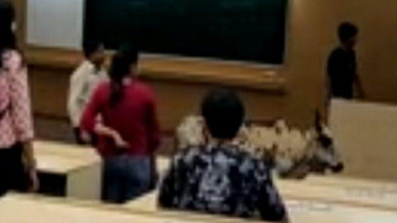 IIT Bombay च्या वर्गात घुसला बैल, शिक्षक आणि विद्यार्थ्यांमध्ये भीतीचे वातावरण; प्रशासन अजूनही शांतच (Video)