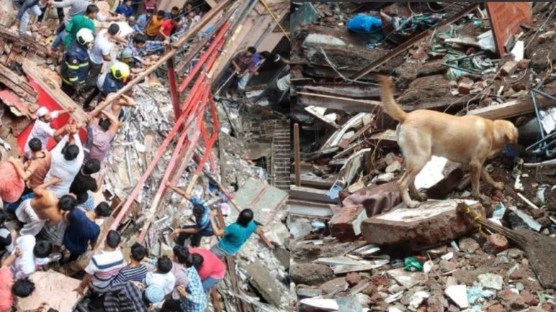 Dongri Building Collapse: केसरबाई इमारत दुर्घटनेत मृतांचा आकडा 14; श्वानपथकाच्या मदतीने शोधकार्य सुरू