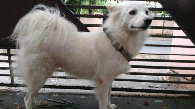 धक्कादायक! कुत्रीच्या प्रेमप्रकरणामुळे मालकाचा संताप; शेजाऱ्या कुत्र्यासोबत अनैतिक संबंध ठेवल्यामुळे घराबाहेर हाकलले