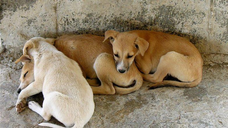 मुंबईत भटक्या कुत्र्यांचा काळाबाजार, रंग लावून विकले जात असल्याचा प्रकार उघडकीस